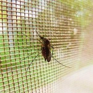 mosquito-19487_640_399
